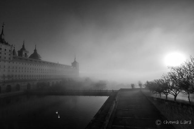 Cisnes sin miedo a la niebla