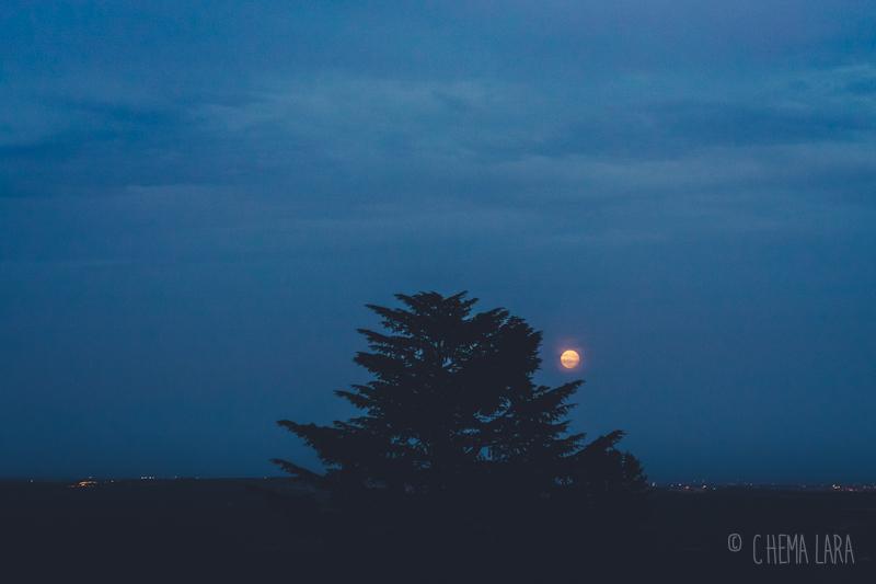 Luna llena y árbol